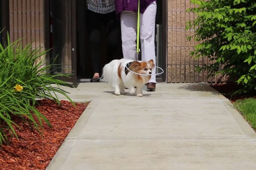 Blind Dog Halo